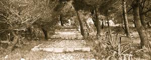 PALMIZANA